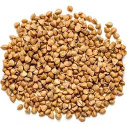 buckwheat australian